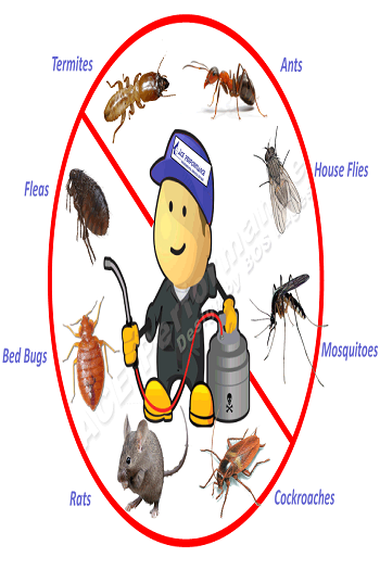 Chandigarh Pest Control Services
